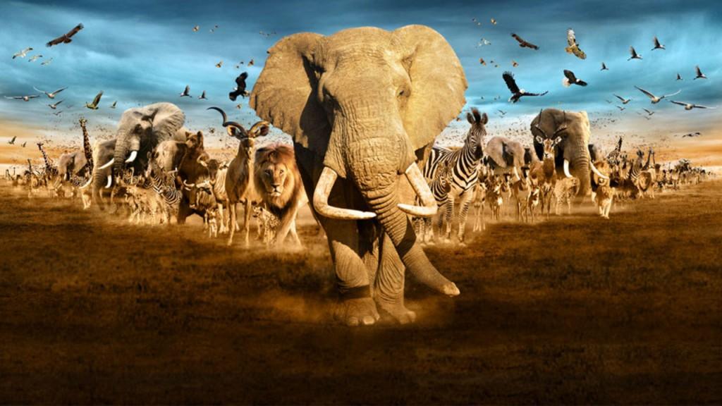 Grandes-animales